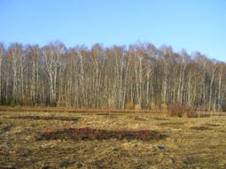 календарь природы апрель