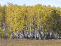 календарь осенней природы