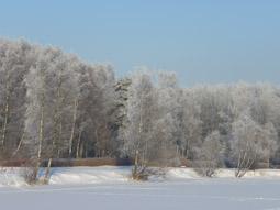 календарь природы декабрь