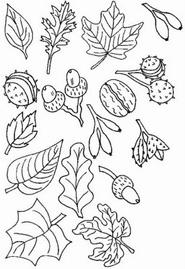 раскраска дары осени