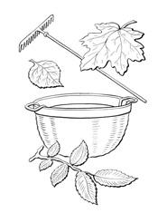 раскраска собираем листья