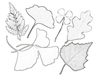 раскраска осенние листочки