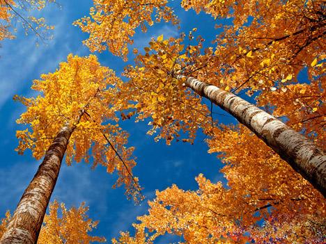 Осенние обои на рабочий стол бесплатно