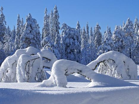 Картинка на рабочий стол зима зимние
