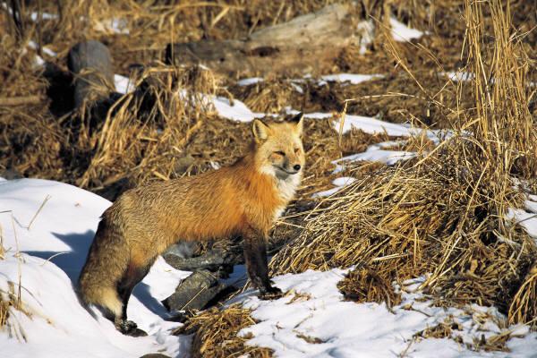 Pobedpixcom / горные животные казахстана