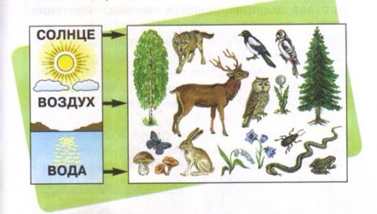 Схема связи объектов живой и неживой природы