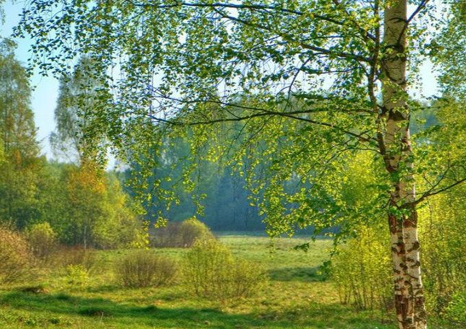 природа и человек сочинения