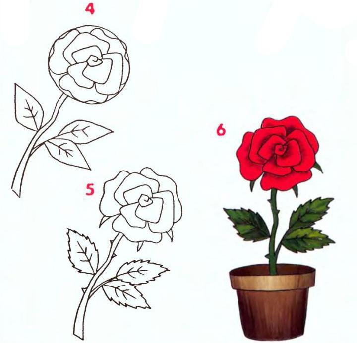 розы рисунки картинки