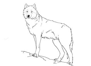 видео уроки рисования карандашом граза