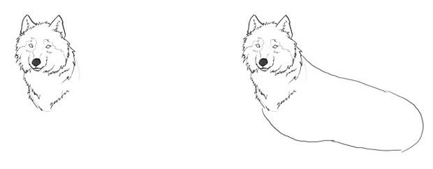 части туловища волка.