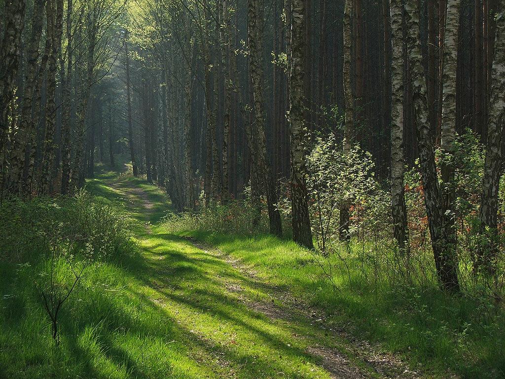 Деревья картинки сказки и развивающие задания для детей