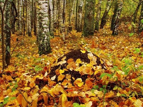 Приметы и суеверия постройку из осины