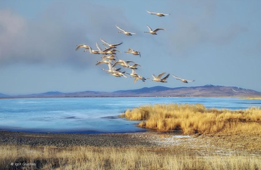Высоко птицы перелетные летят осенью