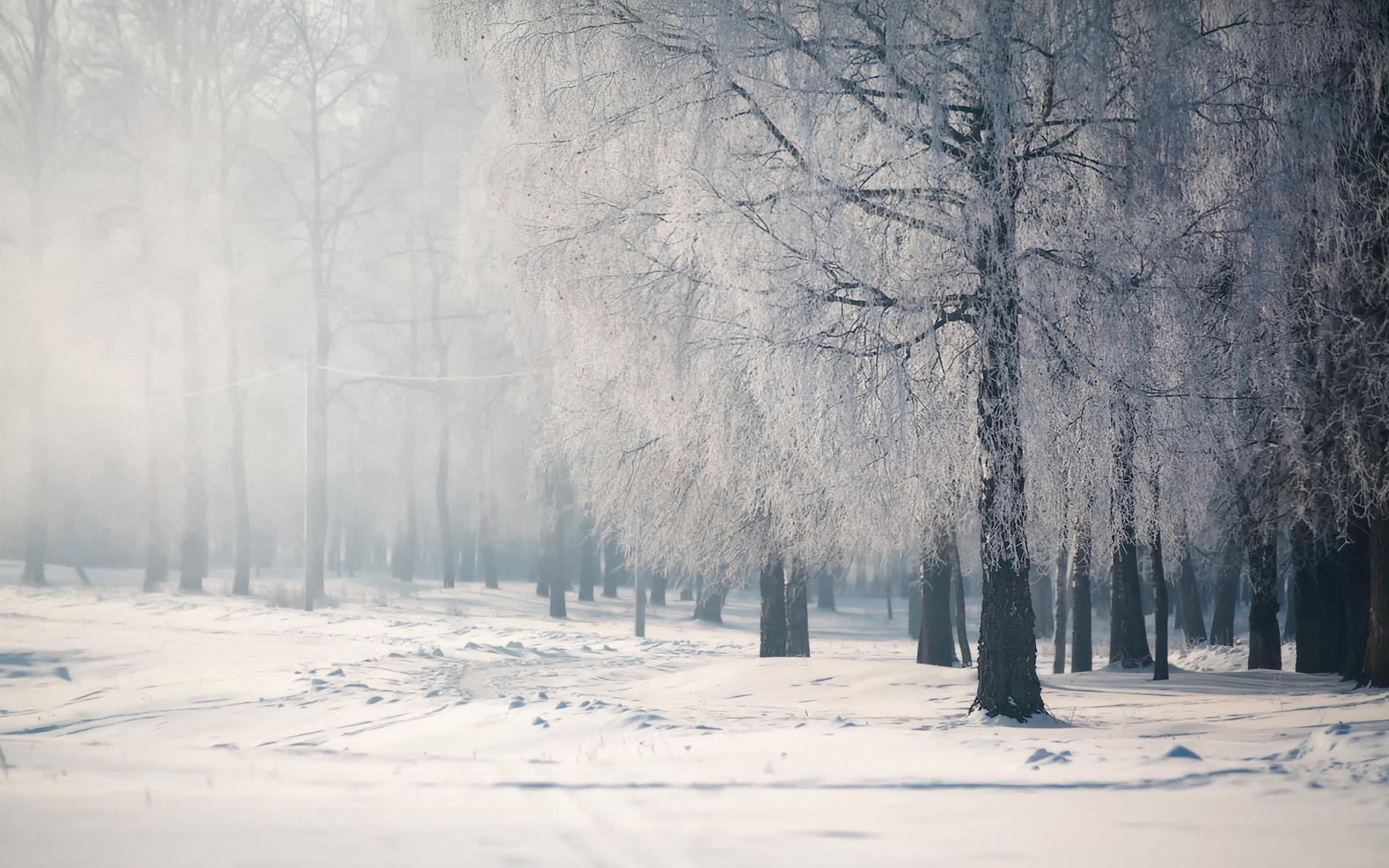 Салаты на зиму рецепты с фото комментарии