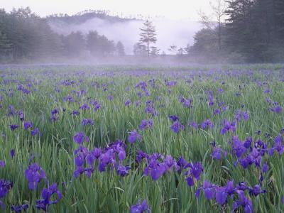 Японские растения
