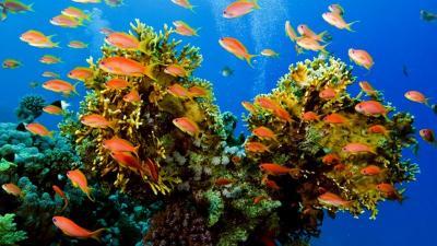 животные океанов и морей картинки