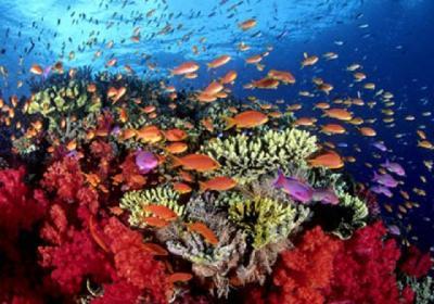 картинки  морей и животные океанов