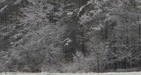 сочинения о зиме