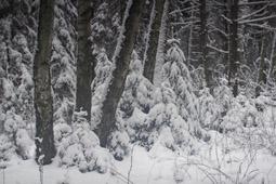 календарь зимней природы