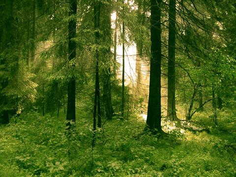 природа в лесу летом картинки