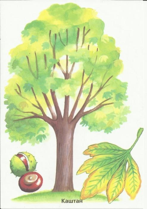картинки для детей растения осенью