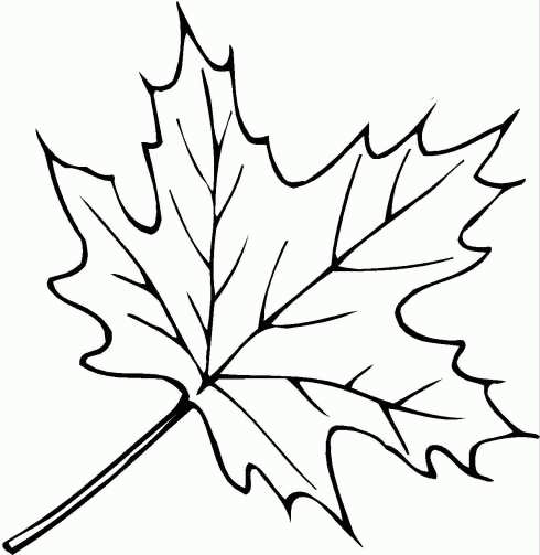 осенние листья раскраски для детей картинки