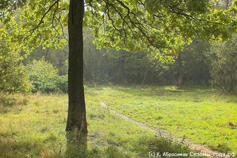 Тропинка в лес