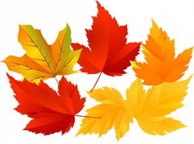 Картинки листья желтые для детей