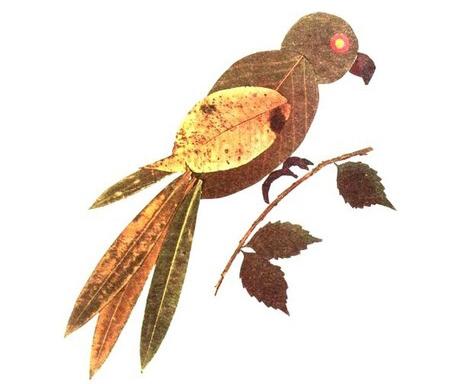 гербарий фото из листьев