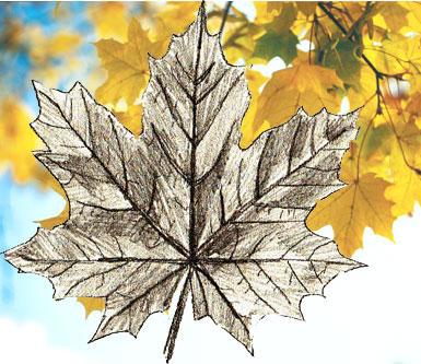 рисунок карандашом осень картинки