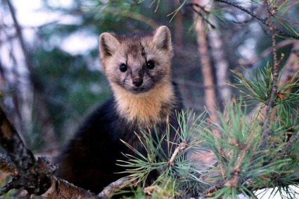 байкальский заповедник животные и растения