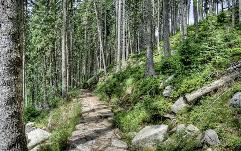 Картинки по запросу чехия лес