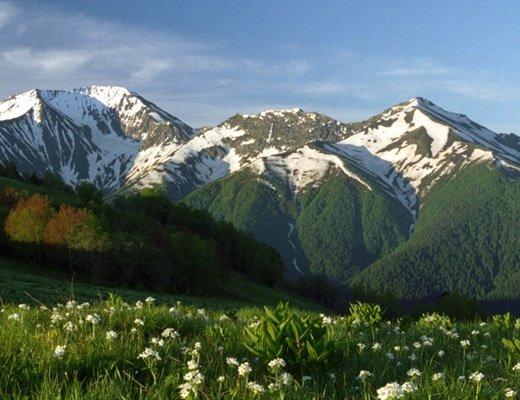 Кавказский заповедник реферат с картинками 9500