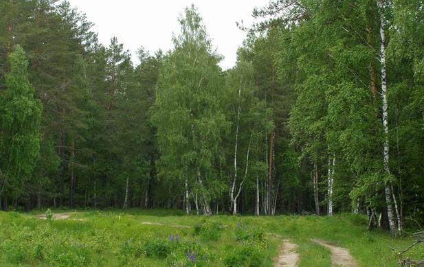 внесения задатка растительность нижегородской области фото стоит