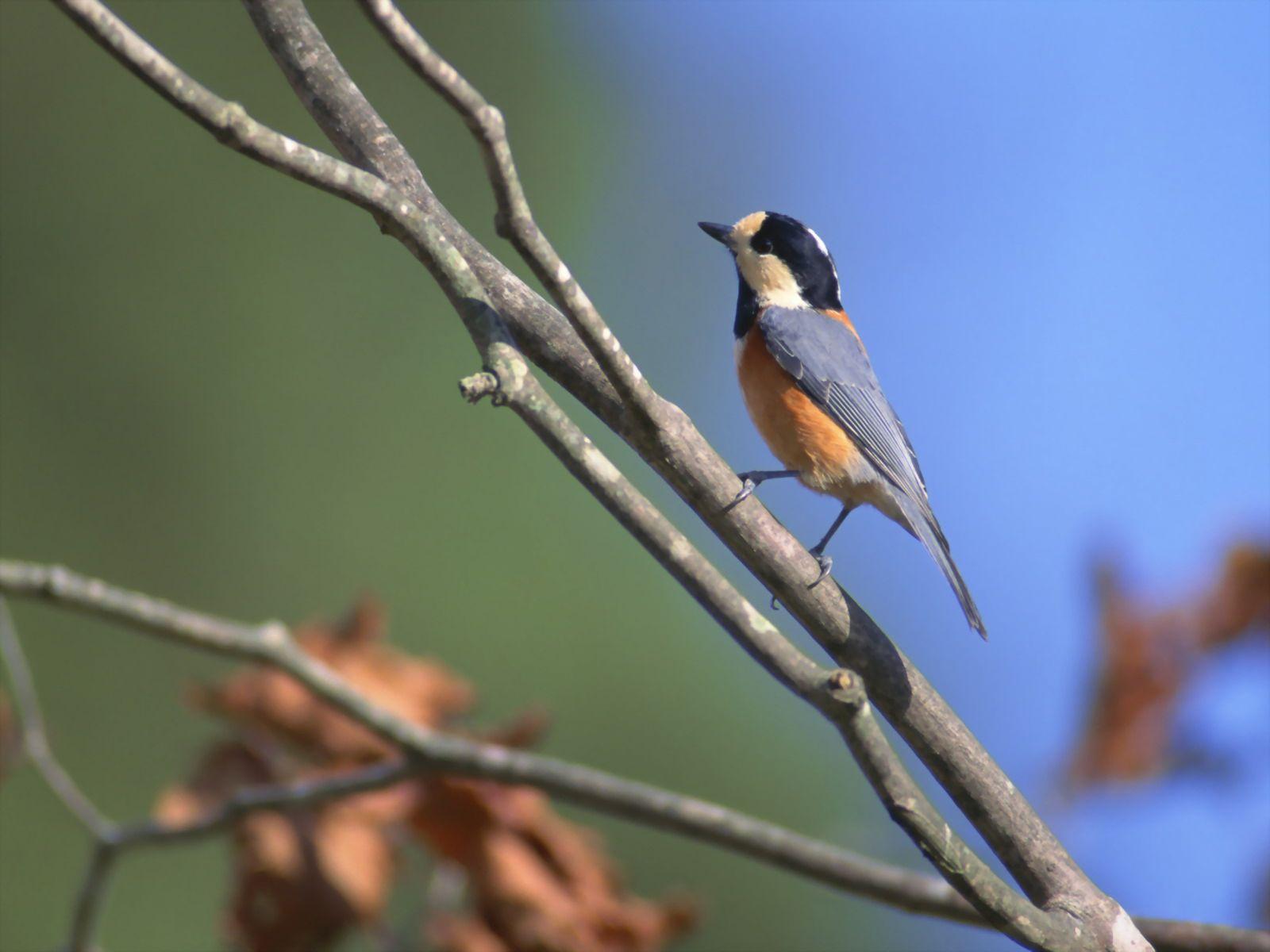 программе птицы юга приморского края фото с названиями каждого них свои
