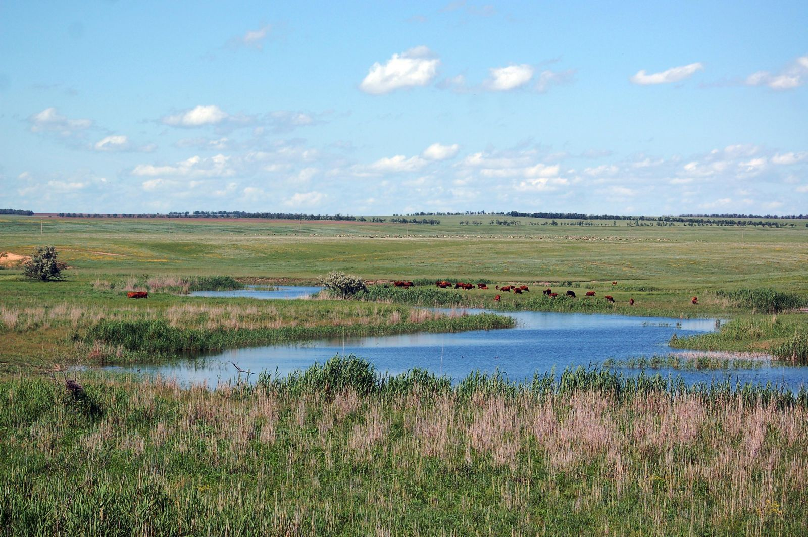 Степи ростовской области реферат 9661