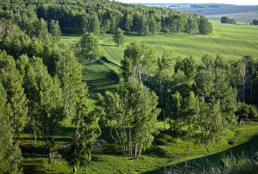 Растительность самарской области реферат 2606