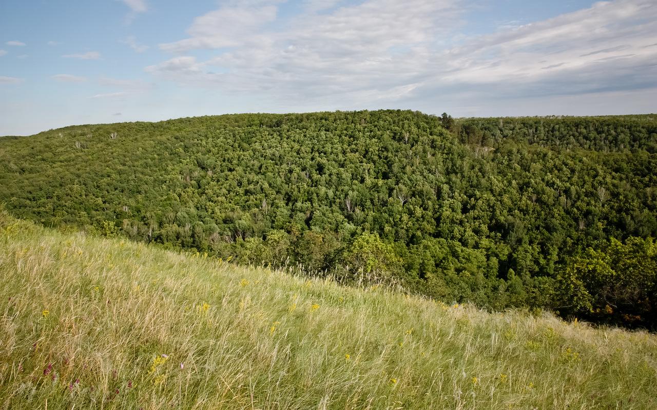 Картинки по запросу саратовская область природа