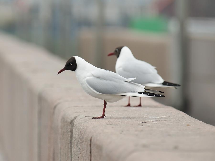 поступок птицы спб фото с названиями задойнов один