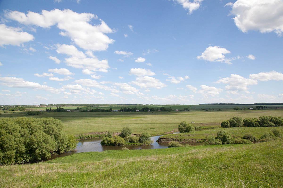 Растительный мир тульской области доклад 9421