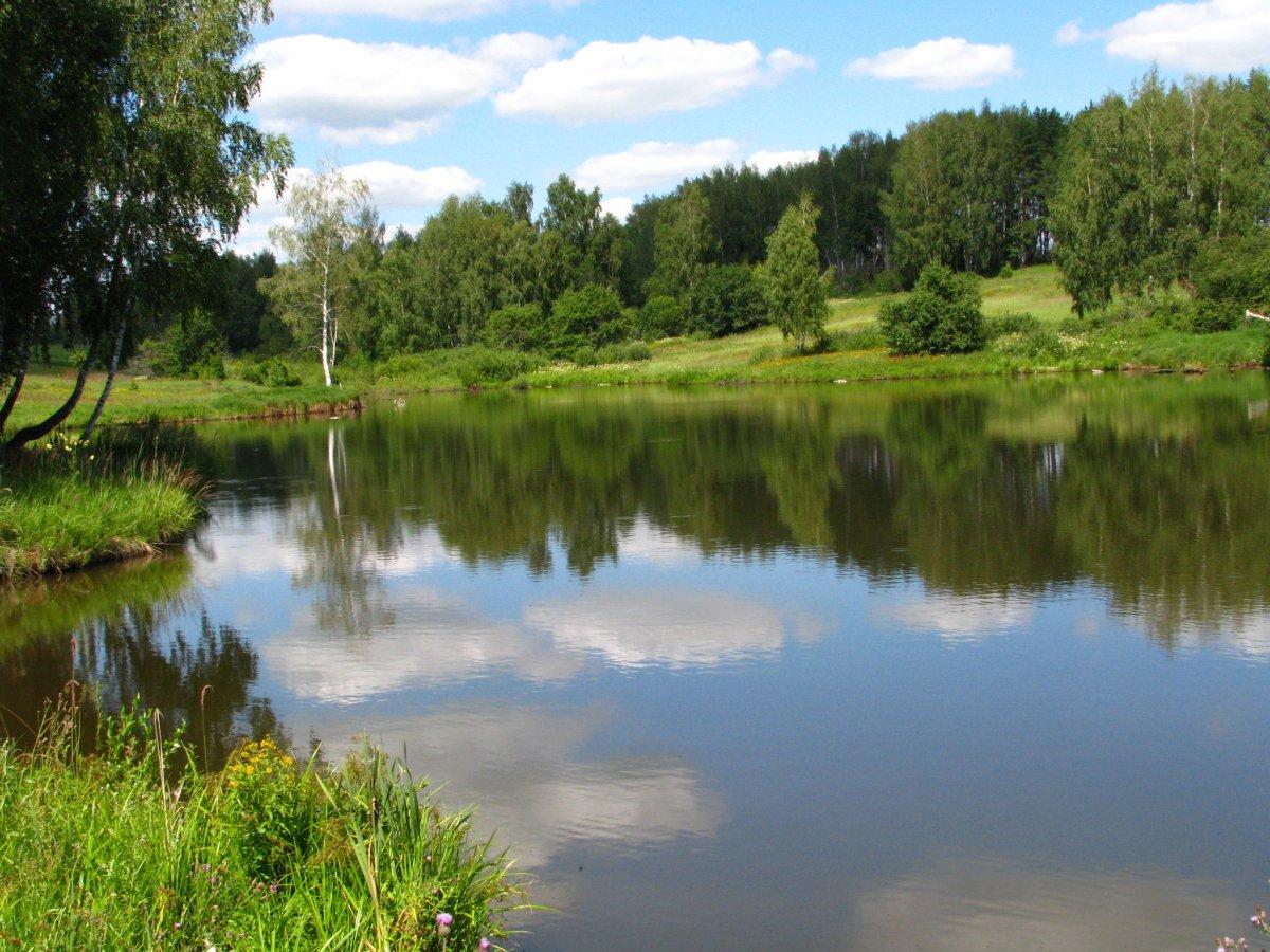 Природа тульской области доклад 3494