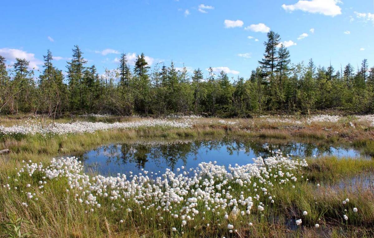 картинки природа якутии весна