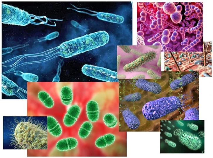 Бактерии в природе доклад 4587