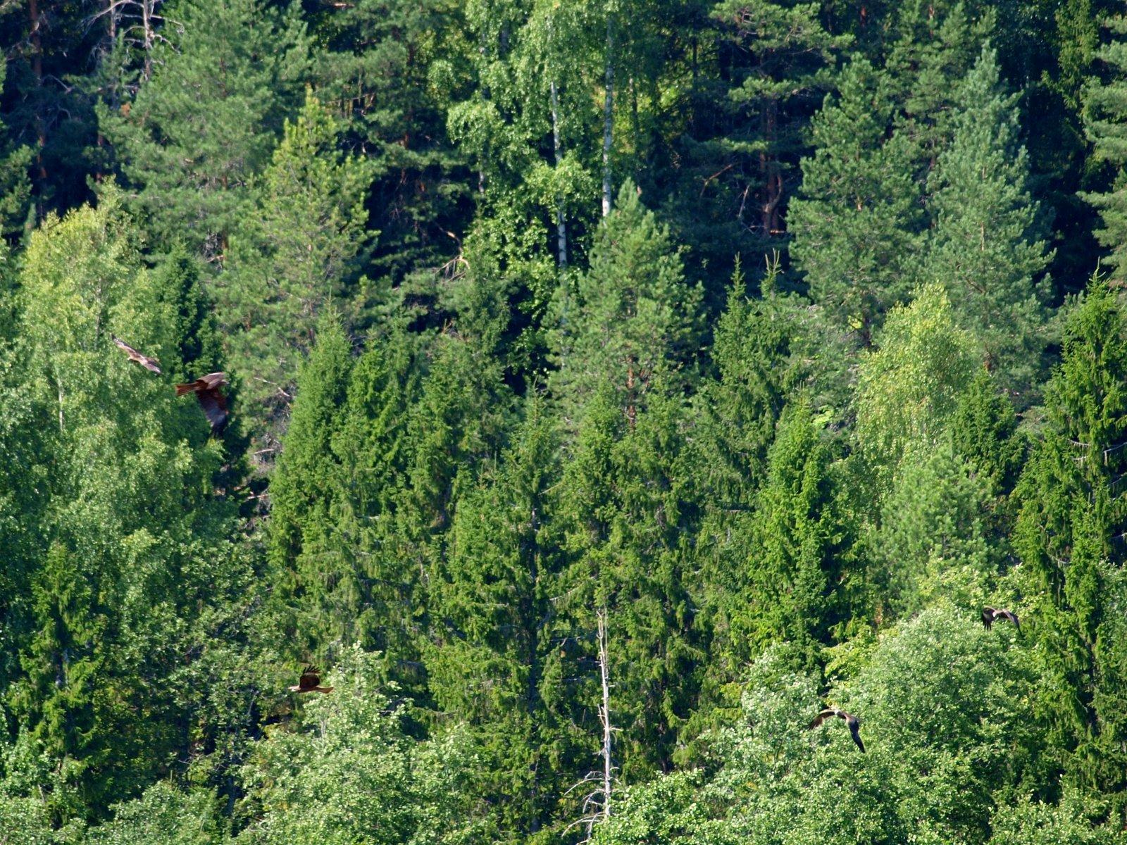 экосистема леса фото съемке собаками