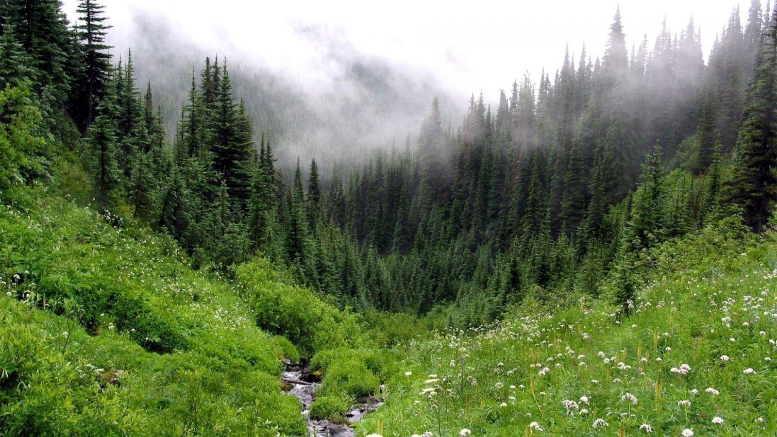 Картинки по запросу лес
