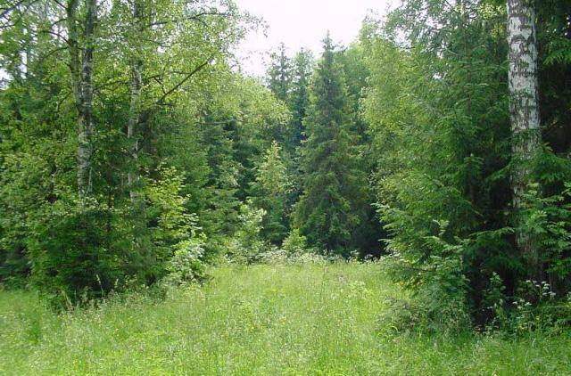 Доклад о смешанных и широколиственных лесах 7906