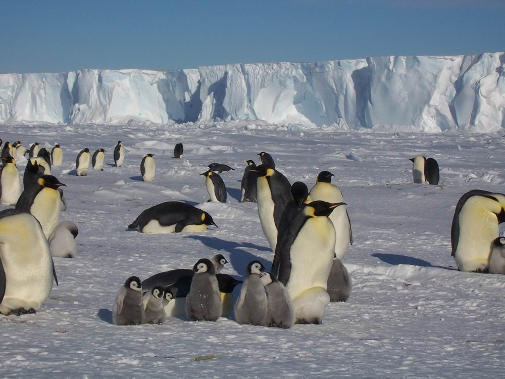 Картинки по запросу природа антарктида
