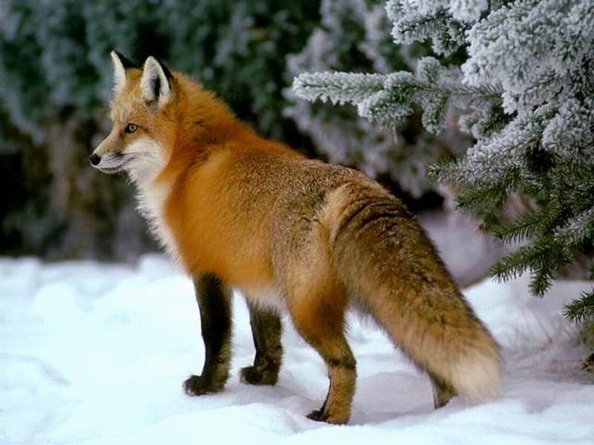 Животные республики башкортостан доклад 7281