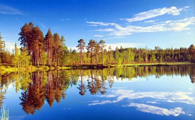 Растения и животные Красной книги Нижегородской области