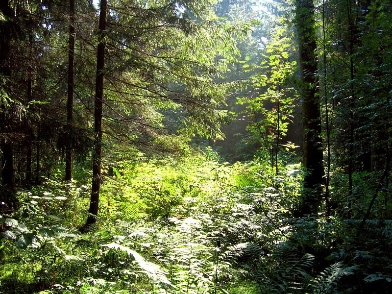 Реферат на тему растительность московской области 4290
